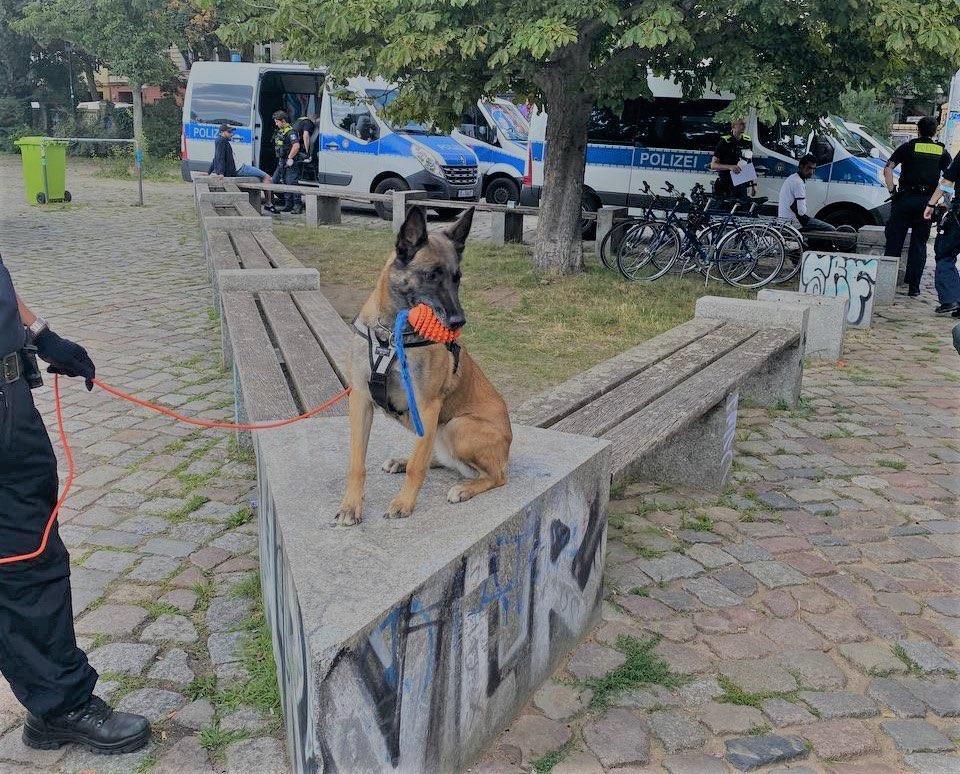 Hund hockt im Görli auf einer Bank mit Spielzeug im Maul.