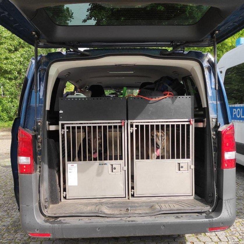 Blick in den Kofferraum eines Kleinbusses, 2 vergitterte Käfige mit jeweils einem Hund darin