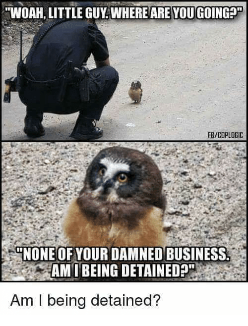"""Polizist beugt sich über Eule und fragt """"Woah, little guy. Where are you going?"""" Antowrt Eule: """"None of your damned business. Am I being detained?"""""""